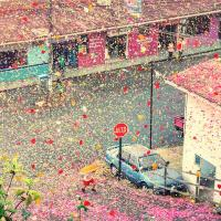 Costa Rica erupts in rose petals