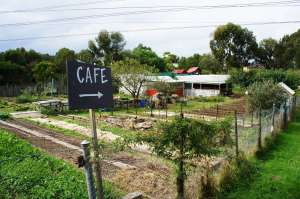 The Ceres Veggie Garden